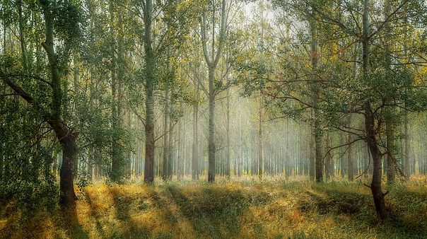 Forest bathing employs nature to promote healthy living